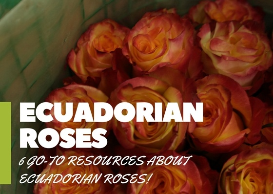 6 Go-To Resources About Ecuadorian Roses