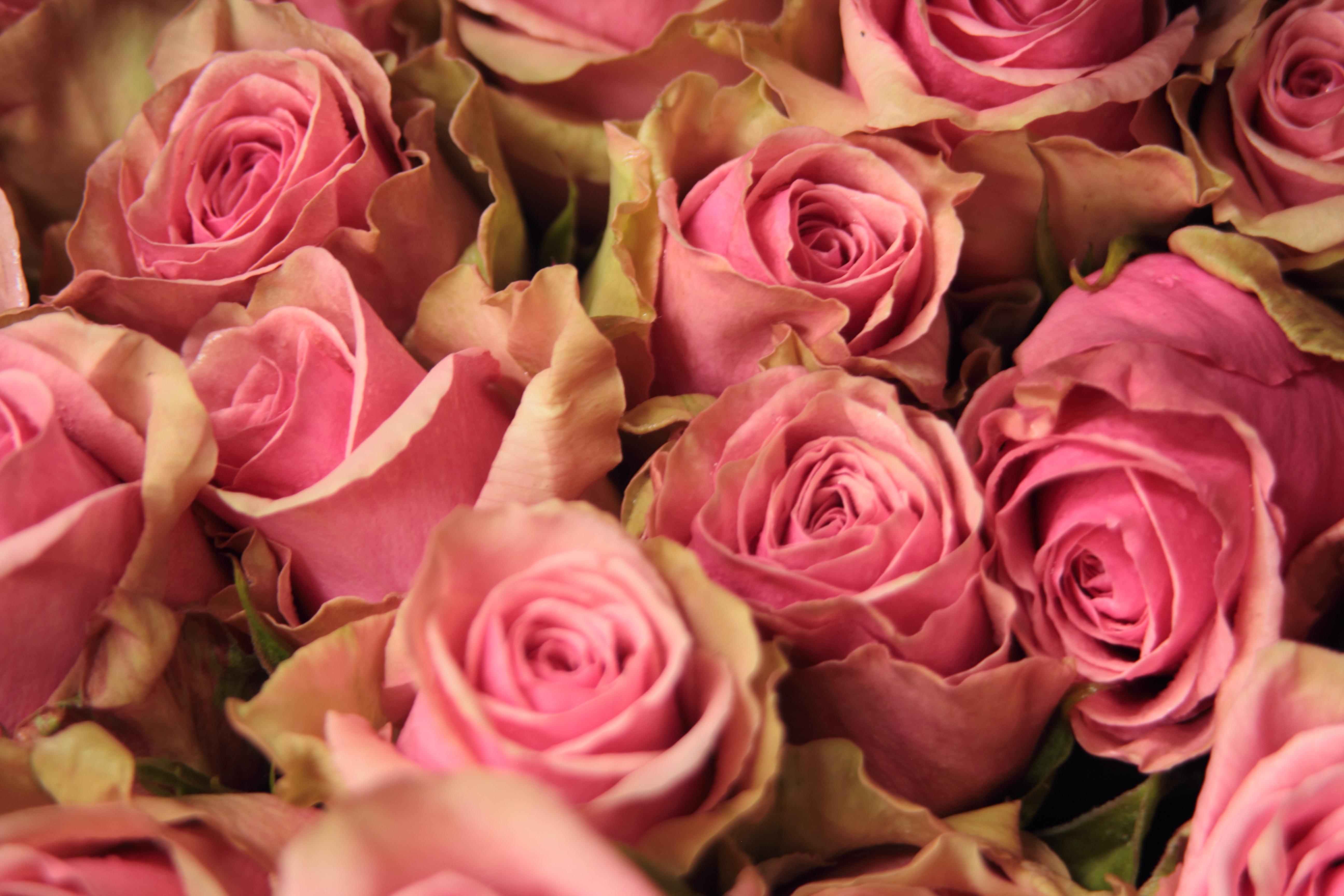 26 Ecuadorian Roses Varieties to Watch in the upcoming wedding season